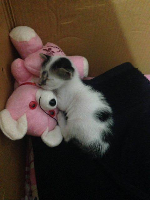 pangur the cat