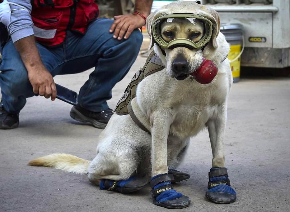 14. A Star & Frida The Police Dog Helped Save 52 Human Lives u2013 Mutually